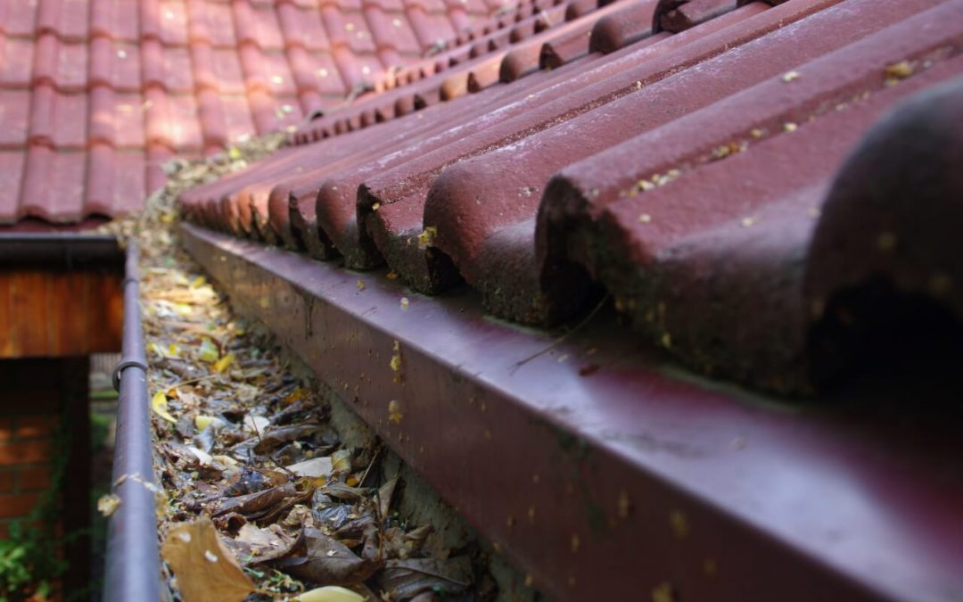 clean the gutters to remove leaves and debris
