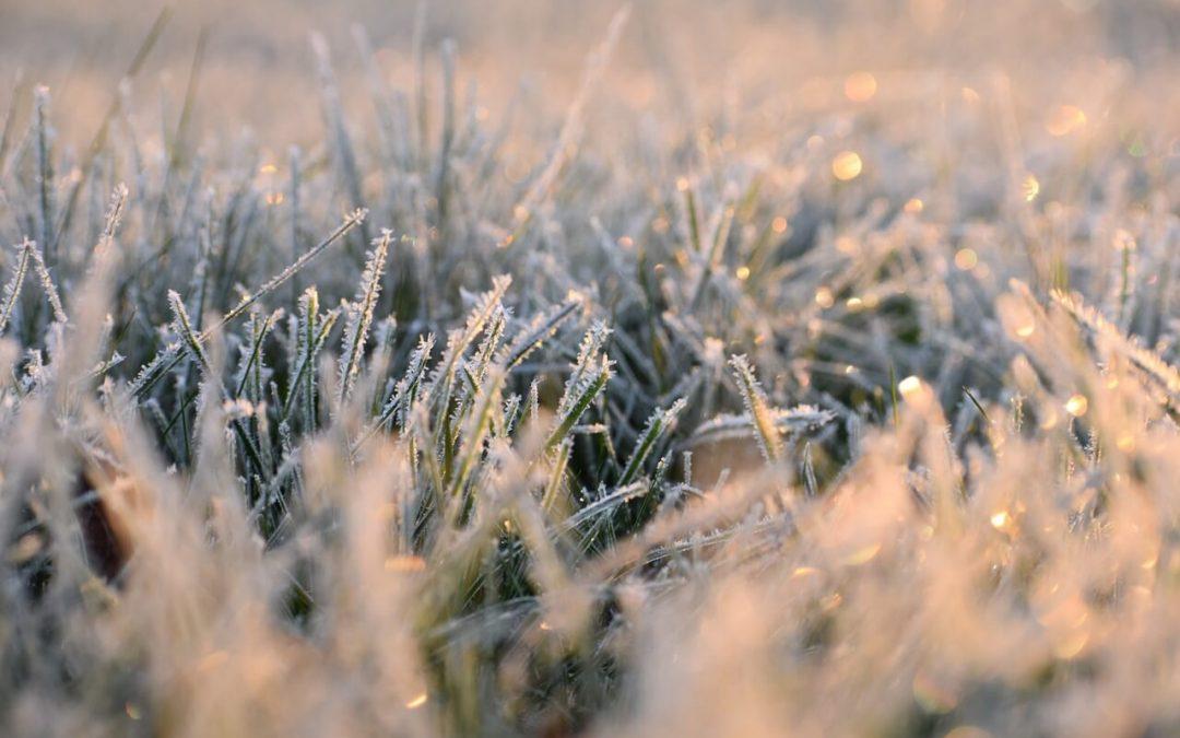 5 Fall Lawn Maintenance Tips